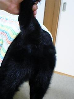 image/reomama-2006-05-18T23:21:17-1.jpg