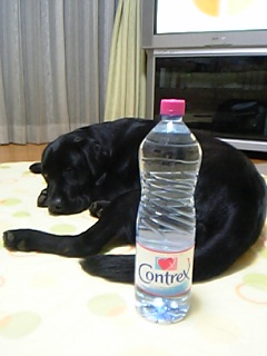 image/reomama-2006-05-31T23:22:51-1.jpg