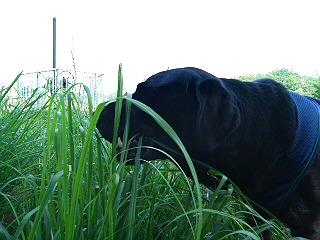 image/syasinka-2006-06-29T08:47:00-1.JPG