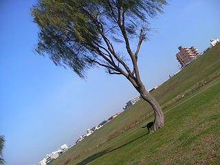 image/syasinka-2006-11-22T09:07:16-1.JPG